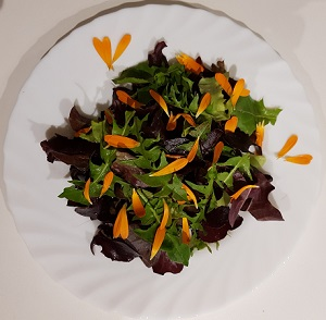 salade-soucis-300x294